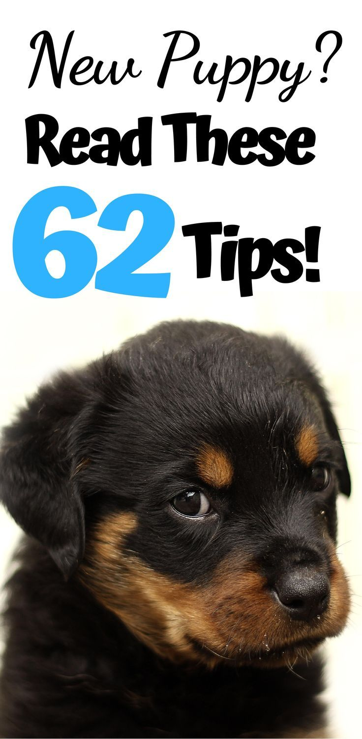 New Puppy? Read These 62 Tips!