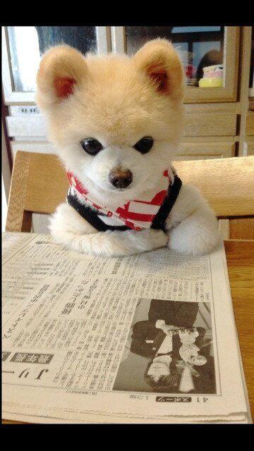 新聞を読む面白い犬の壁紙pc