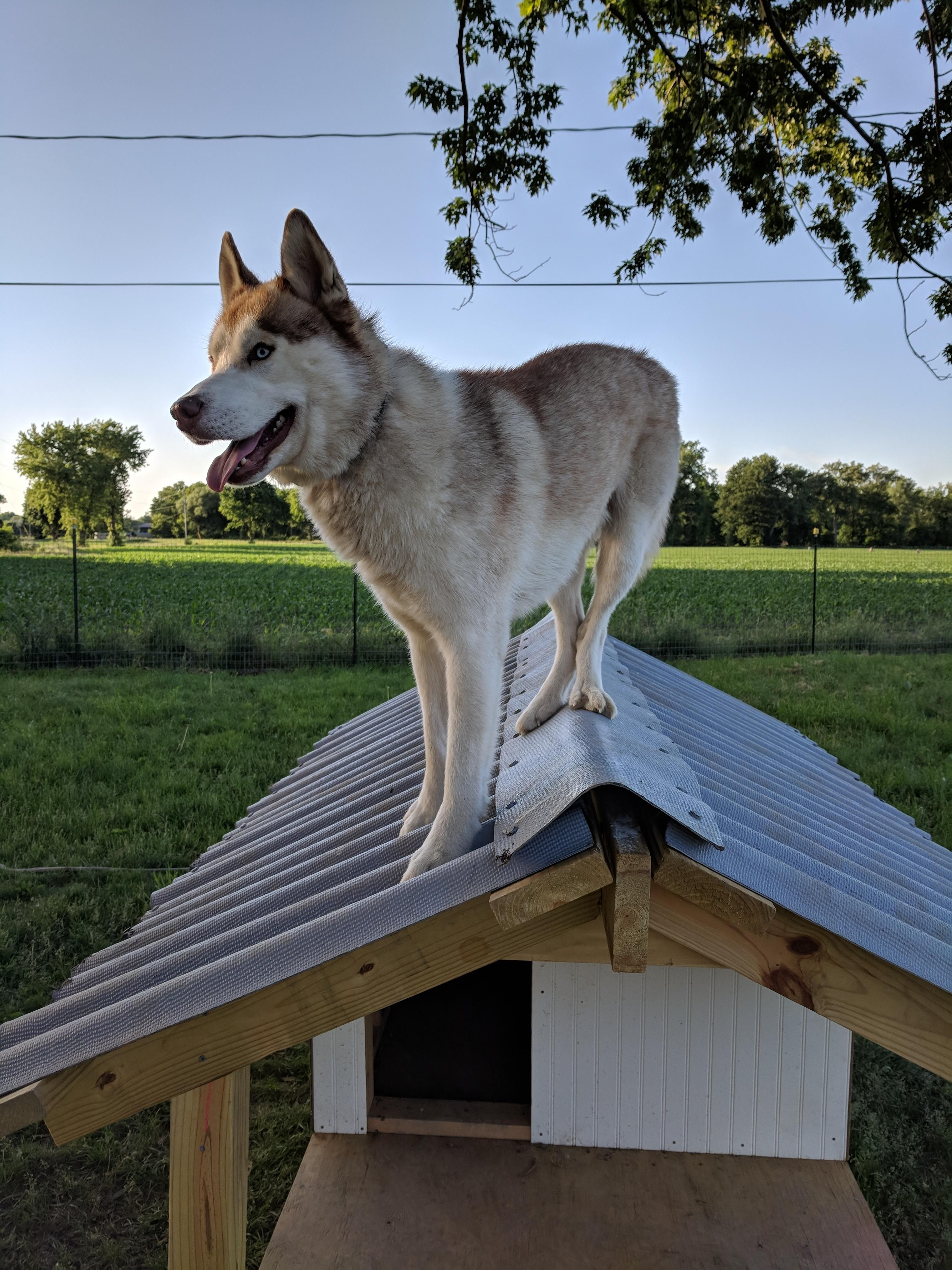 Thank You For Building Me A Dog House Https Ift Tt 2n1vamp