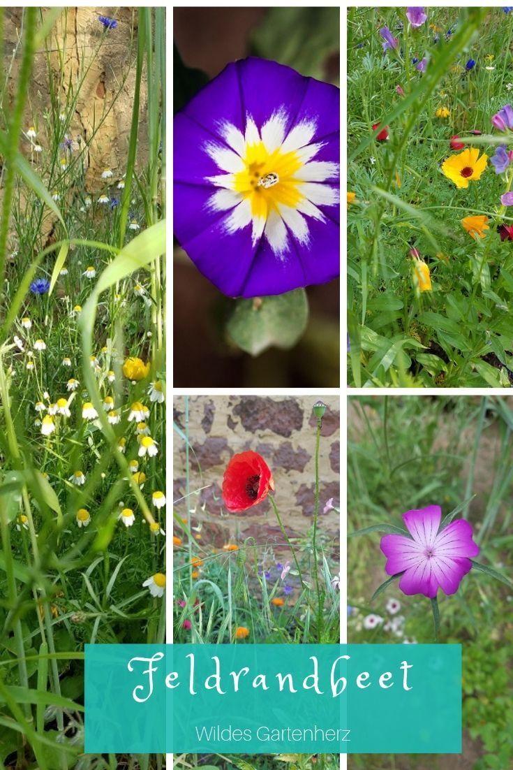 Schnell wachsende Pflanzen #schnellwachsendepflanzen