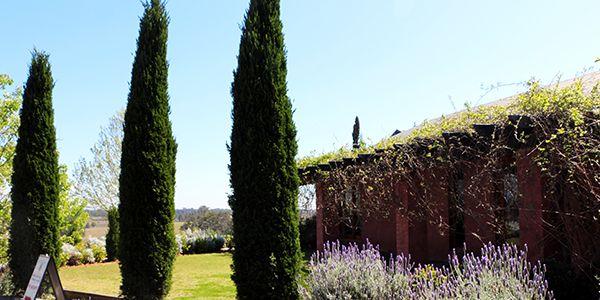 vinícolas perto de Sydney Hunter Valley