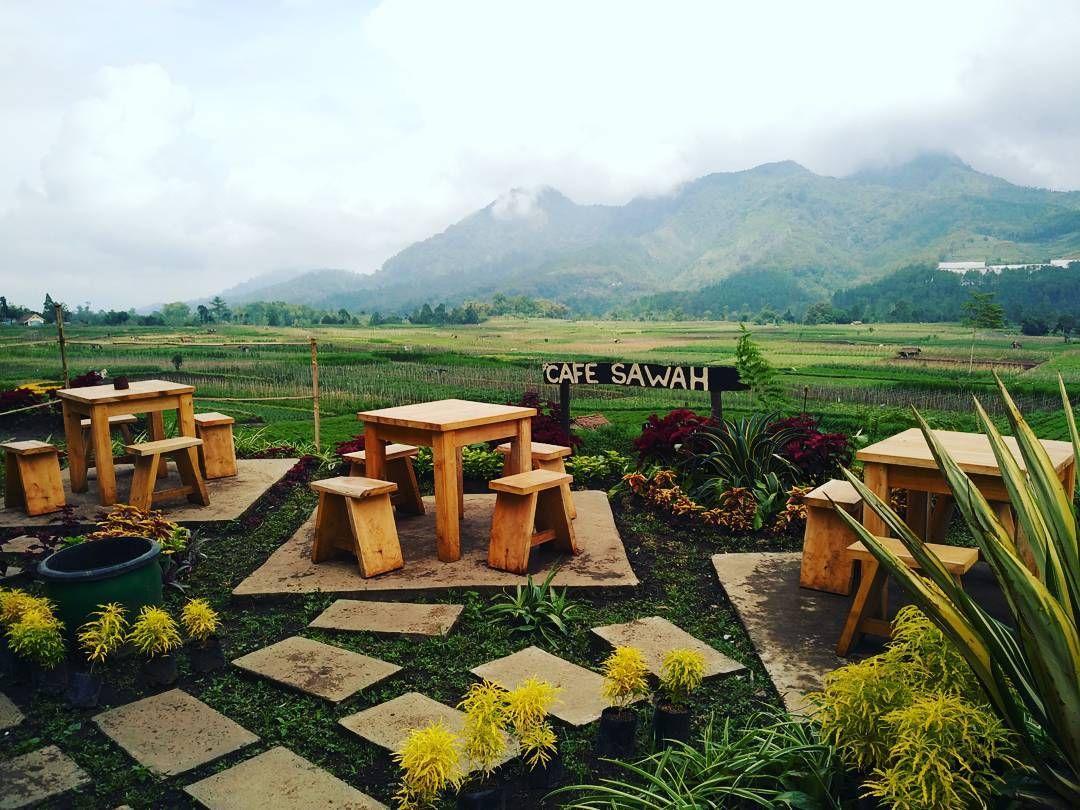 Lokasi Dan Rute Menuju Cafe Sawah Pujon Serunya Menikmati Hidangan Di Temani Pemandangan Sawah Http Www Rumah Kebun Pertamanan Belakang Rumah Pemandangan