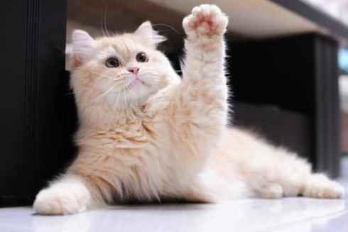 Сute lazy cat