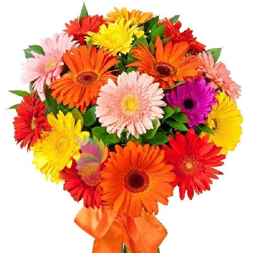 Sale and Delivery flowers, plants, cake and original gifts at home in Italia and worldwide. Order online with MyFloraWeb