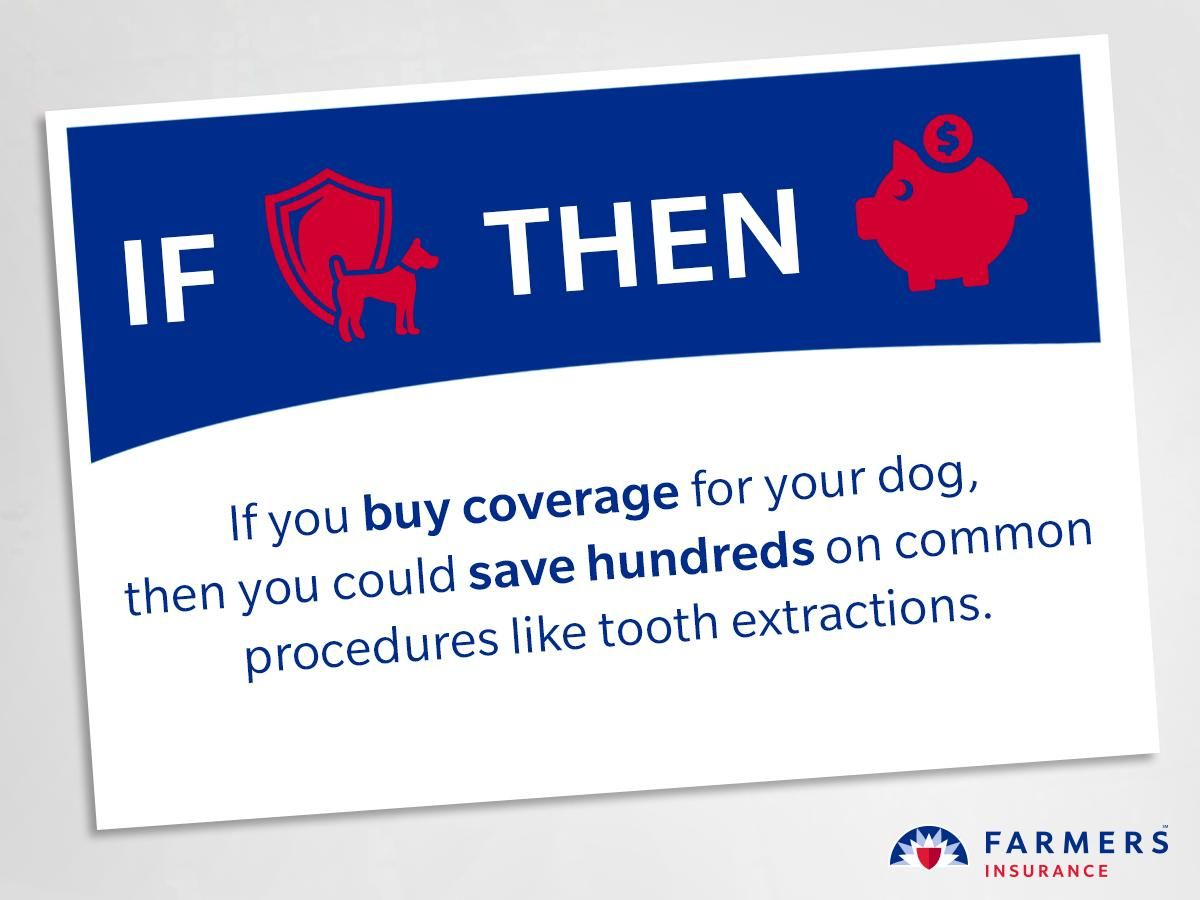 Without Pet Insurance Removing Your Canine S Canine Could Cost