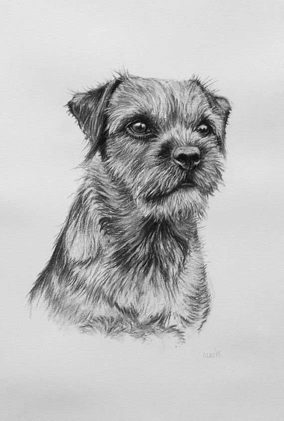 Border Terrier Dog Wall Art Print Farmhouse Decor Dog Drawing