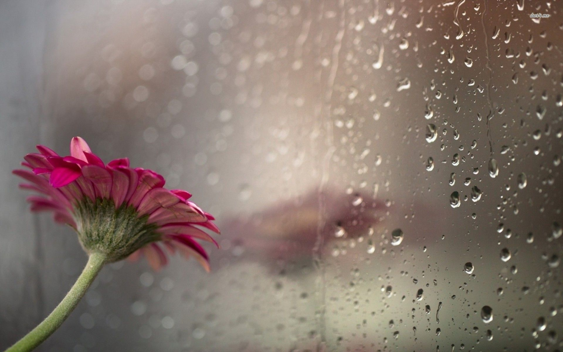 Rainy window wallpapers wallpaper 19201200 rainy pictures rainy window wallpapers wallpaper 19201200 rainy pictures wallpapers 37 wallpapers adorable altavistaventures Image collections