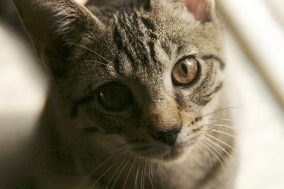 Como fazer uma torre para gatos | eHow Brasil