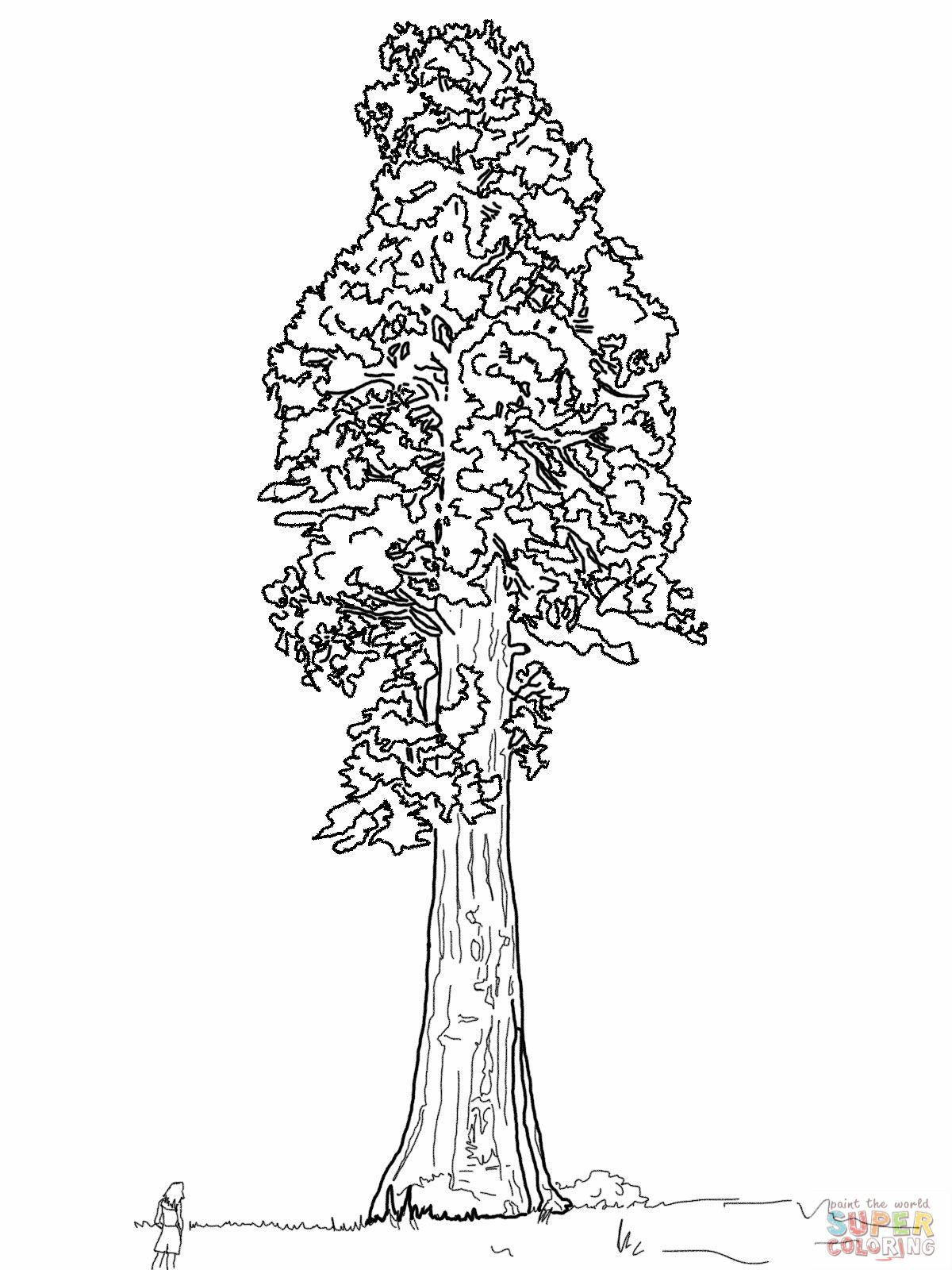 Giant Sequoia Sentinal Tree Coloring Page