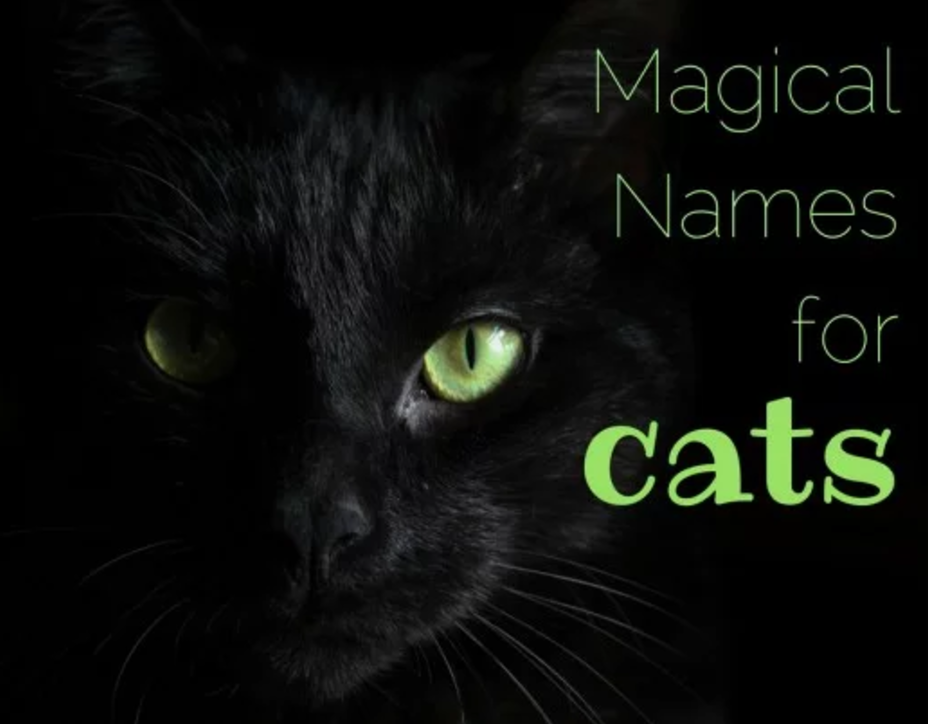 155 Magical Names For Cats Girl Cat Names Names For Black Cats Unique Cat Names