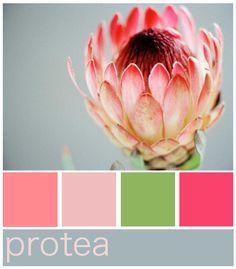 Protea Colour Palette Protea Wedding Protea Art Protea Flower
