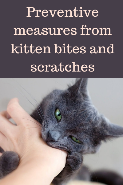 Preventive Measures From Kitten Bites And Scratches With Images Kitten Biting Kittens Cats And Kittens