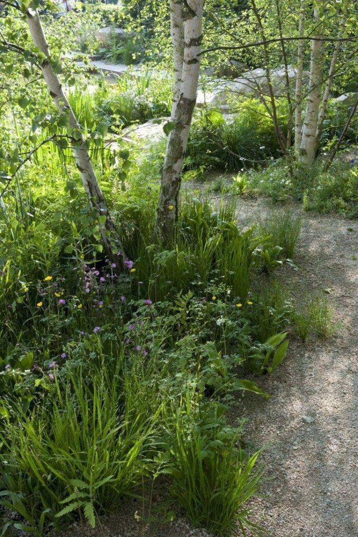 Photo of Contemporary Garden Paths Plants