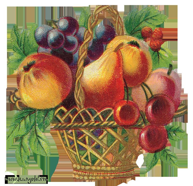 фрукты в вазе картинки для декупажа производитель биологических препаратов