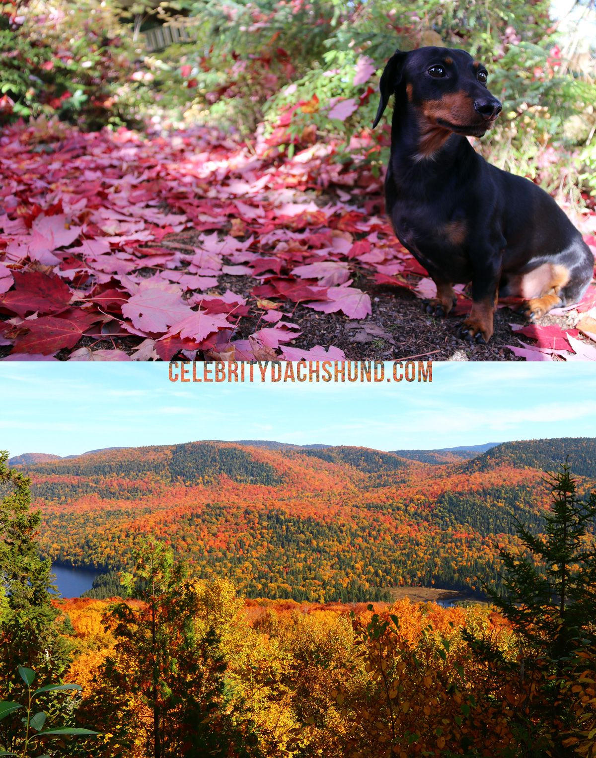 Couple shots from this past weekend - the beautiful colors of Fall!