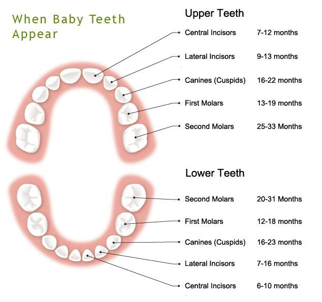 Teething is a natural part of your babyu0027s growth and another stage - baby teeth chart