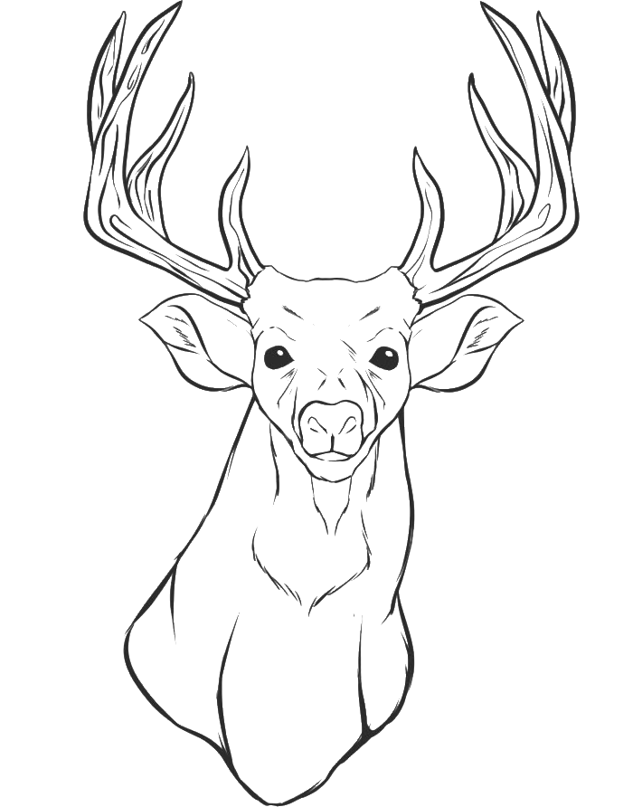 A Deer Head Coloring For Kids