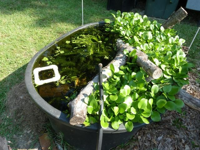 Breeding guppies outdoors in a 110 gallon tuff stuff stock for Stock tanks for fish