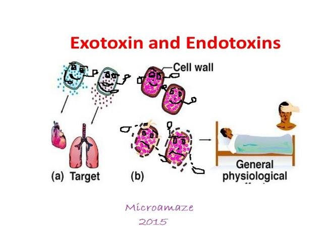Difference between Exotoxin and Endotoxin   Cell wall ...