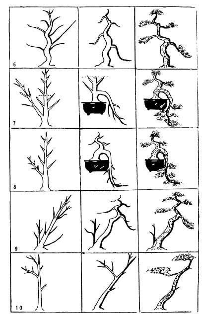 bonsai tree image by mike voyzey on things to practice