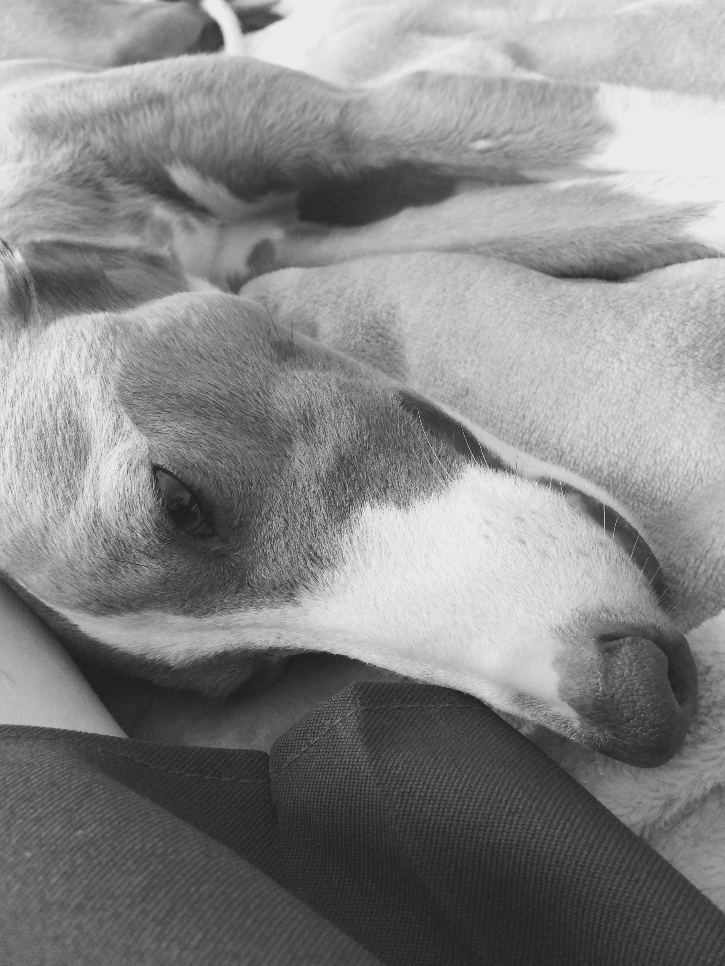 Connieboo us dog meg cute kittens dashing dogs gorgeous guinea
