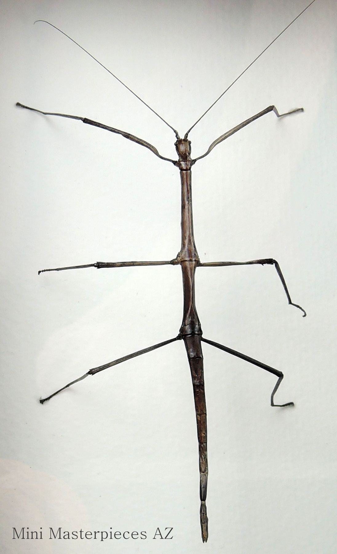 curiosities and oddities by mini masterpieces az walking stick