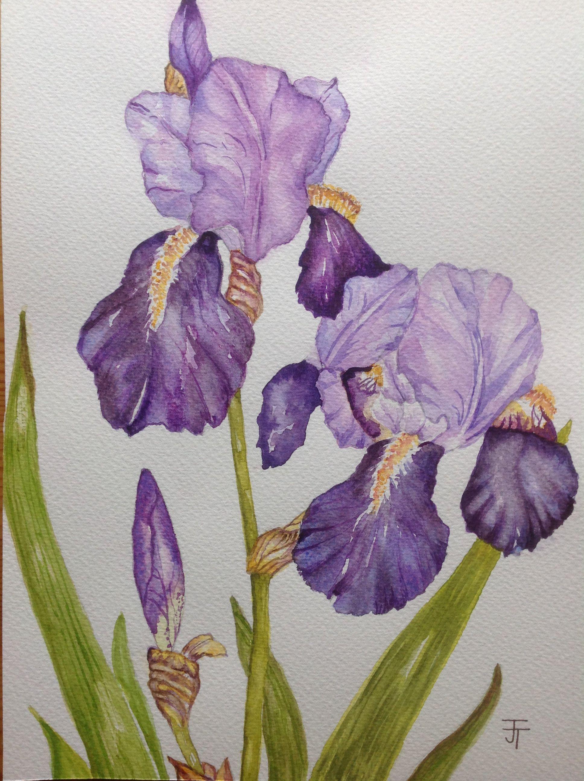 Watercolour Painting Purple Iris Watercolour Flowers Watercolour Iris Wall Art Home Decor Iris Painting In 2020 Iris Painting Flower Painting Watercolor Flowers