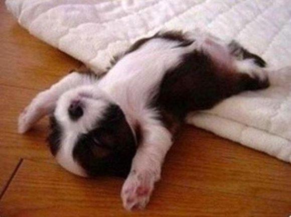 Food Coma Win Cutest Animals Pinterest Funny Funny Pictures