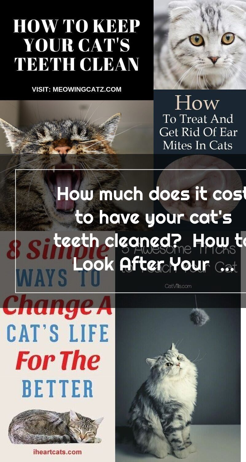 How much does it cost to have your cats teeth cleaned
