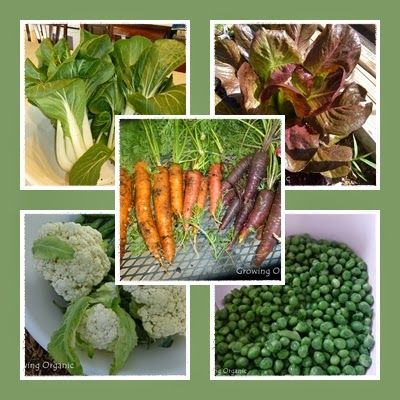 """Growing Organic : Meet the """"Cool Crops"""" of Spring!"""