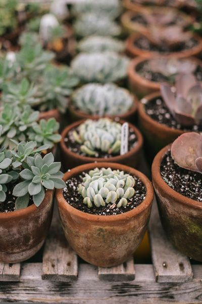 The 25 best plant pots for sale ideas on pinterest used Cactus pots for sale