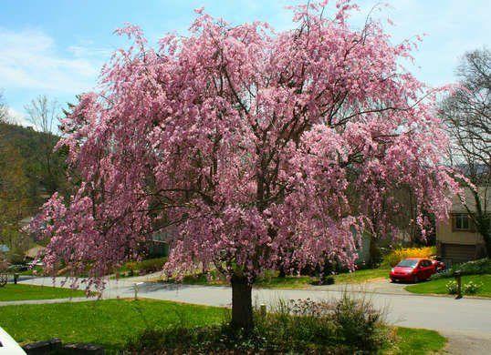 10 Of The Best Trees For Any Backyard Backyard Trees Backyard