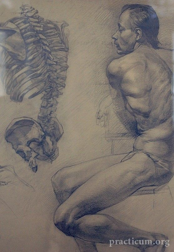 Academic drawing - a classical way to study anatomy | Russian ...