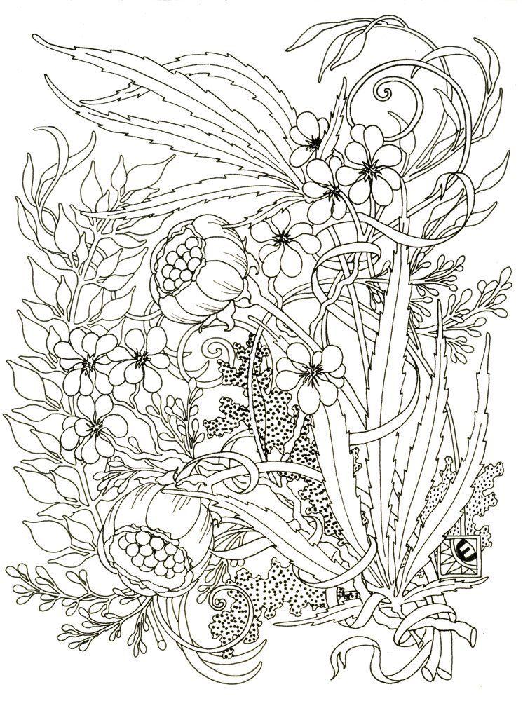 [BB+090513+Poppies+line+1K300.jpg] Coloring books, Blank