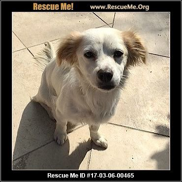 California Dog Rescue Adoptions Rescueme Org With Images