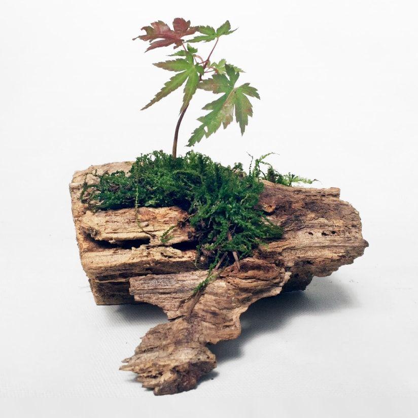 作り方 流木