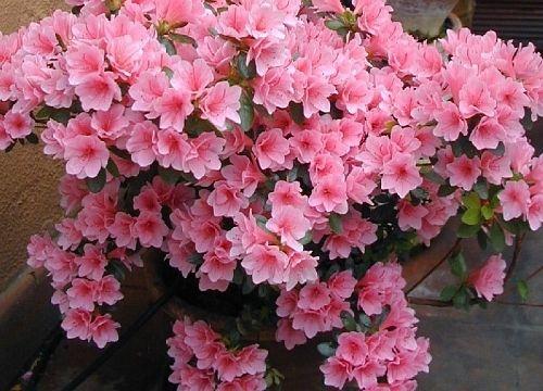 Plantas com flores para jardim gallery of a flox uma for Plantas decorativas resistentes