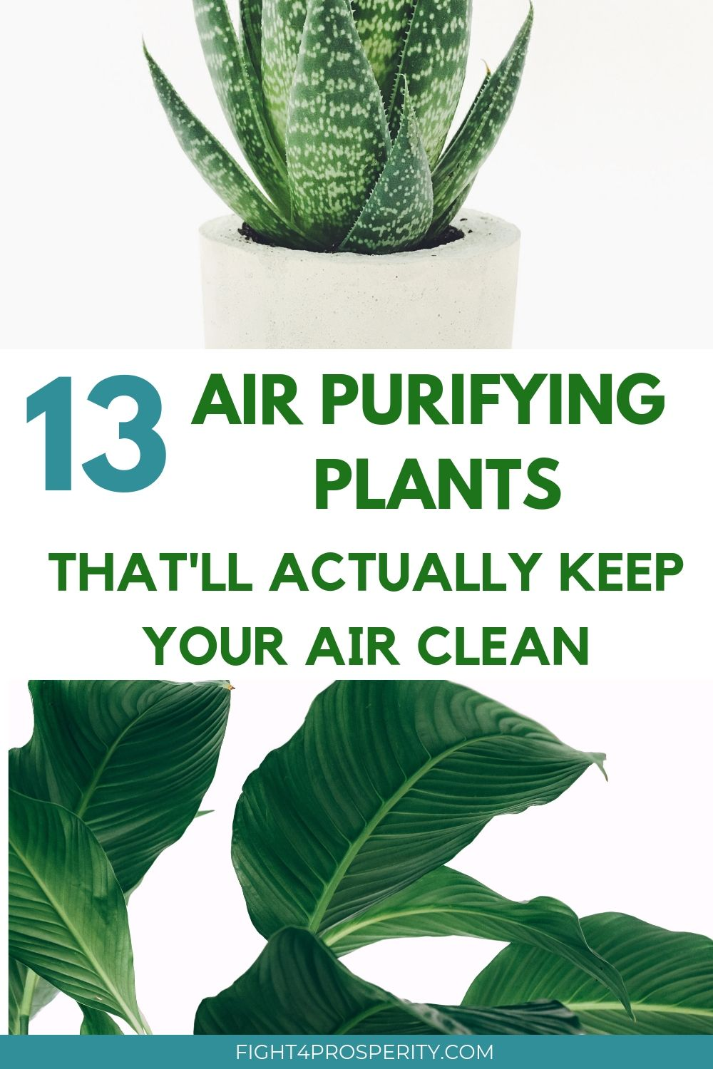 Air Purifying Plant Top 13 Houseplants To Clean Indoor