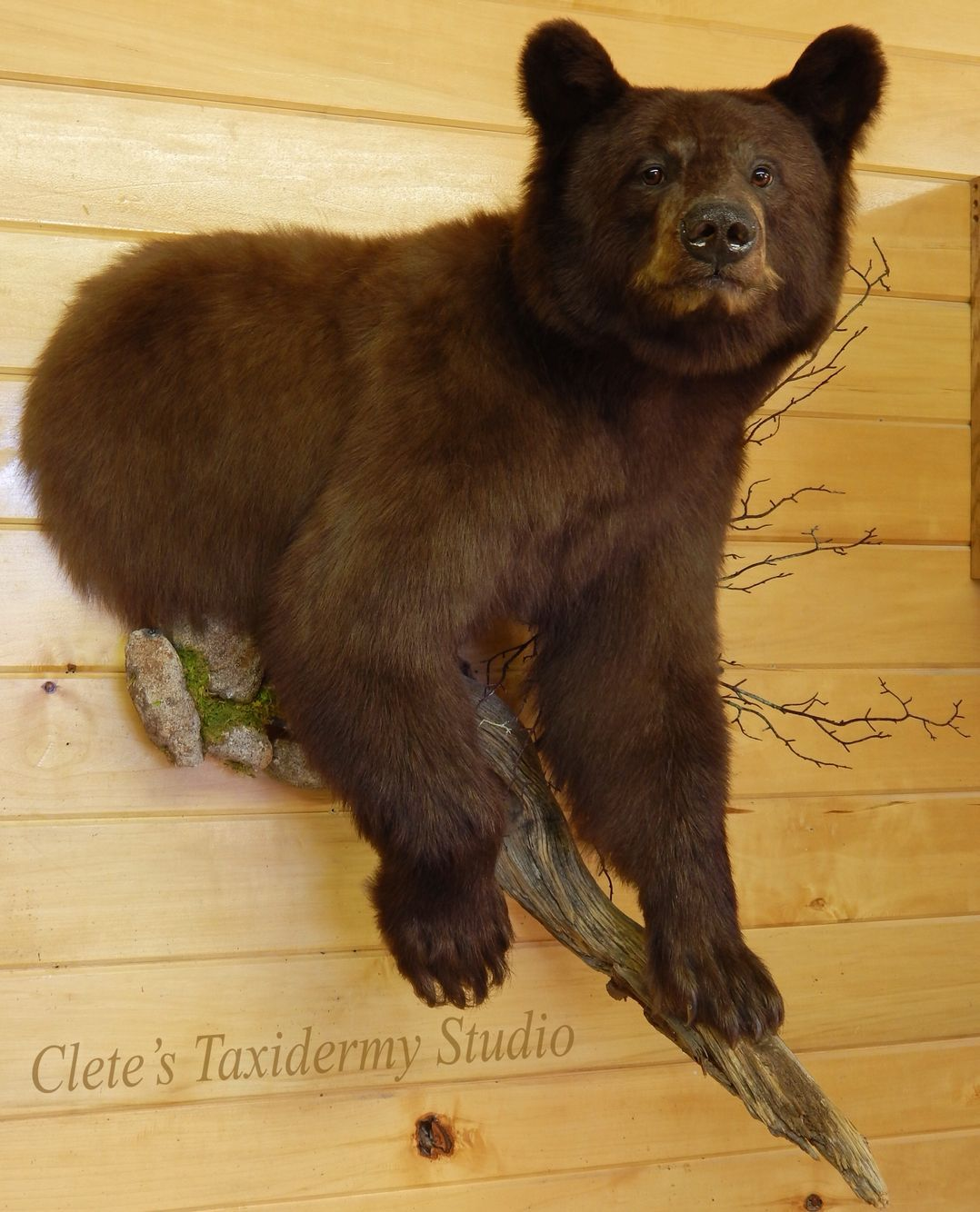 Full time master taxidermist in Ebensburg, PA Taxidermy