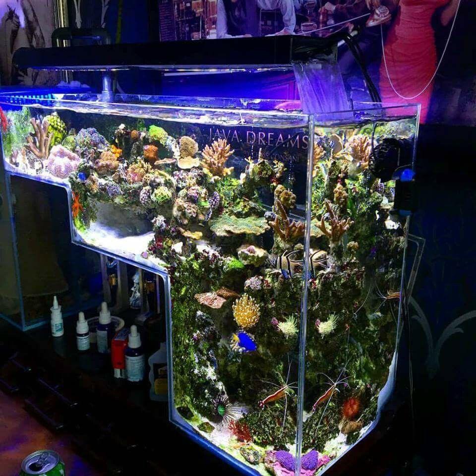 Pin by Barry L on Aquarium and Fish Pinterest Aquariums Fish