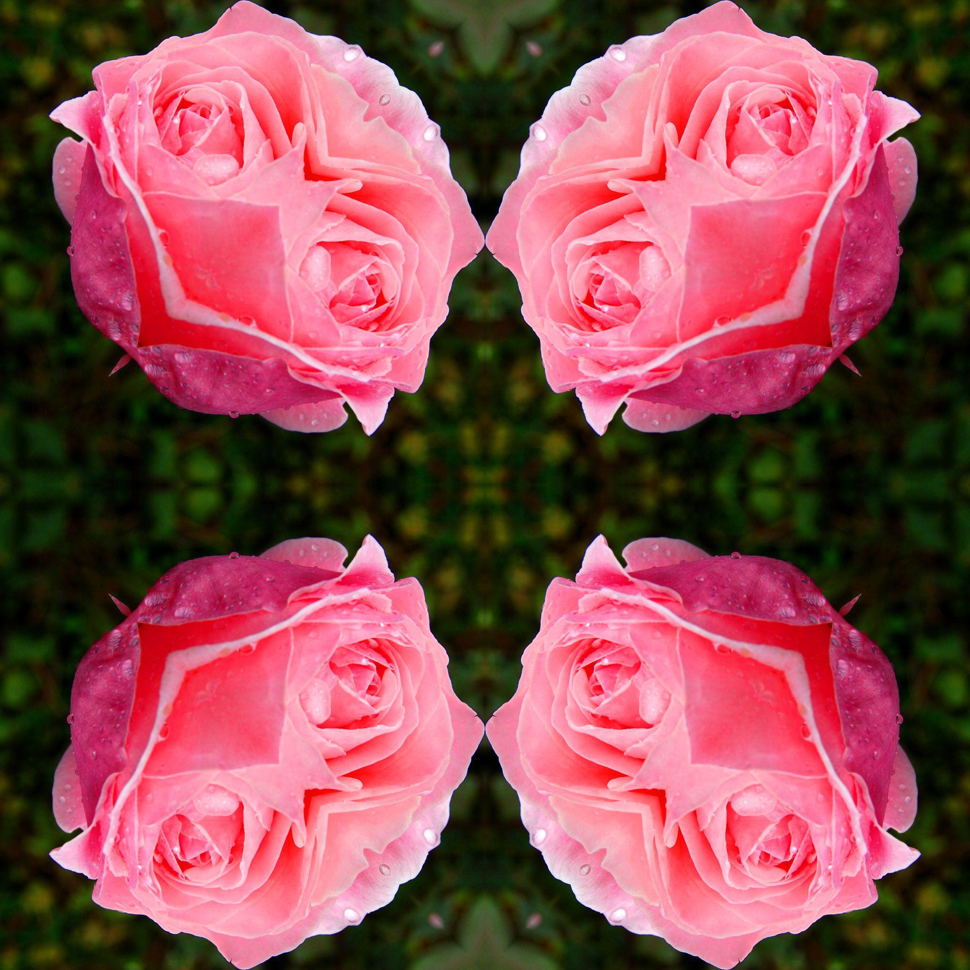 фаре легонько фоторедактор с эффектами цветы постепенно вставляйте рулоны