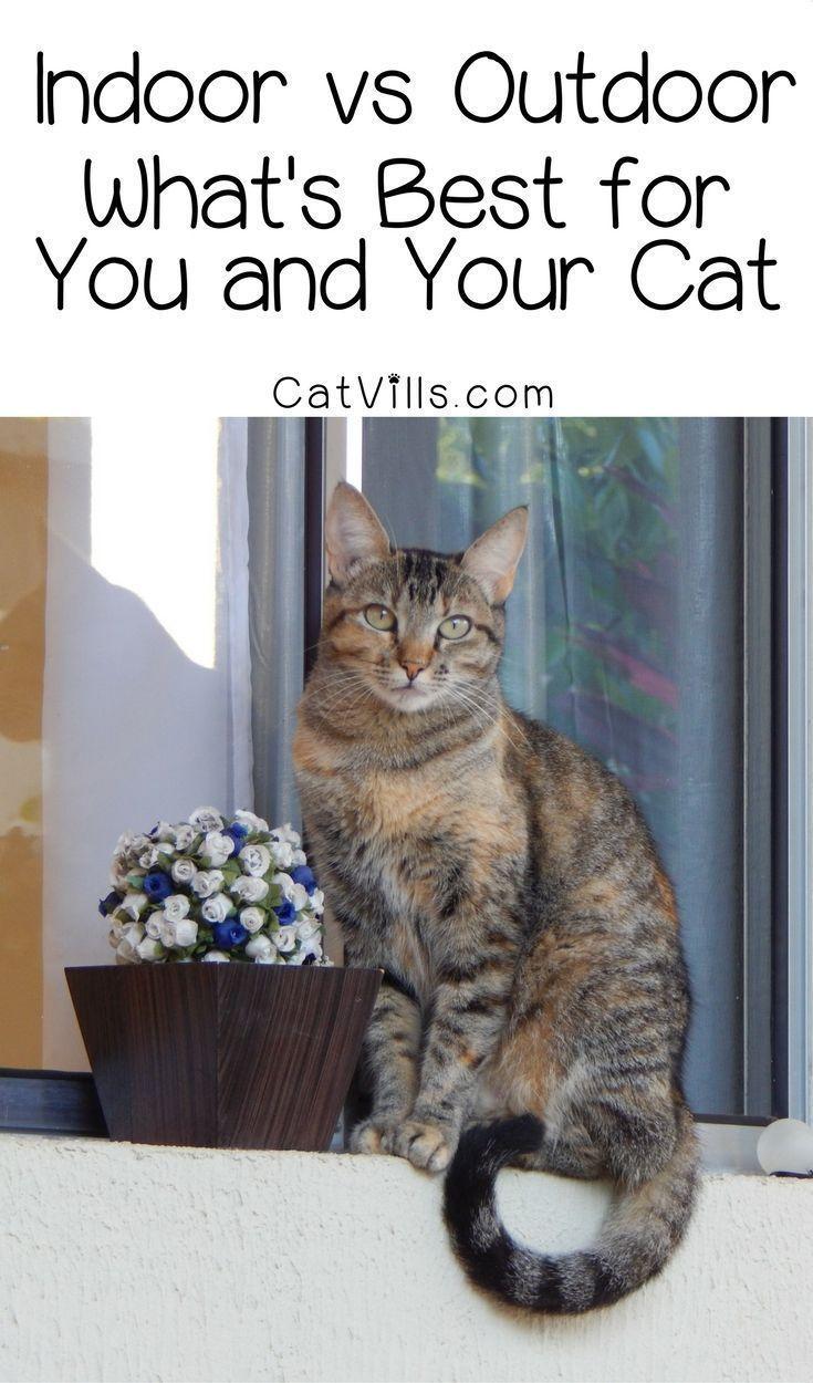 Indoor vs outdoor which is best for your cat? You