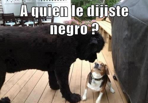 A Quien Mascotas Memes Memes De Perros Chistosos Gracioso