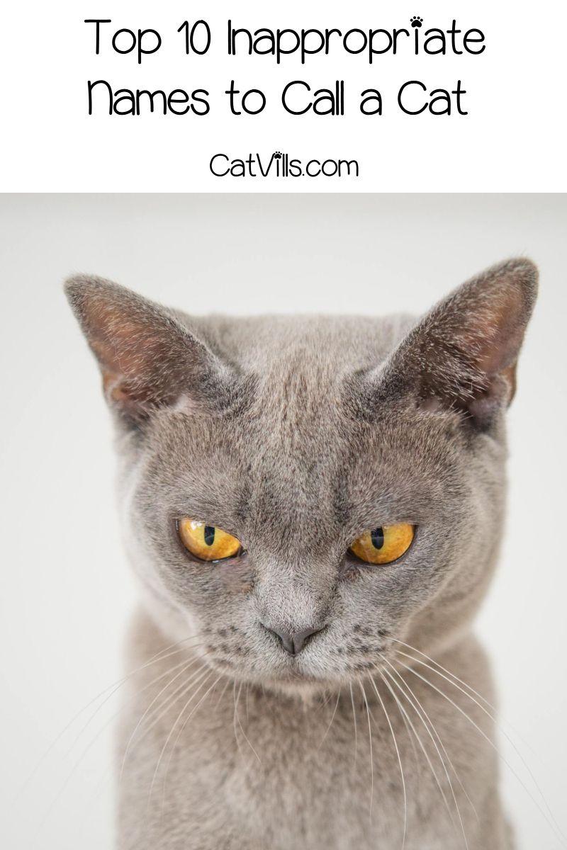Pin On Catvills