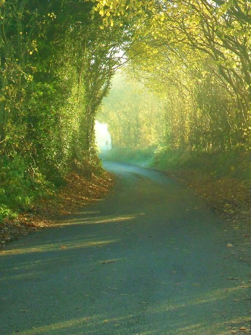 ~Archway of trees in the early morning frost, Hobs Hole Lane, Aldridge, Walsall, England~