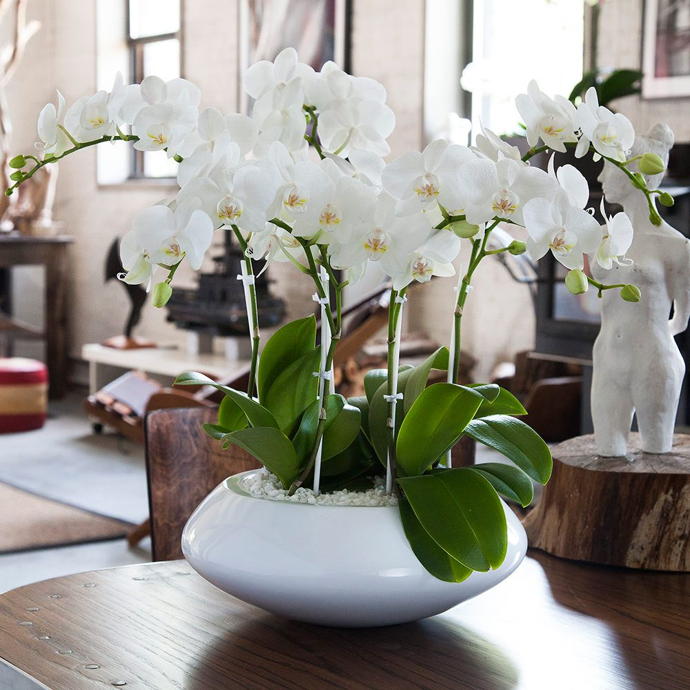 Orchid Arrangement Jadore White With Mini White Orchids Orchid Arrangements Beautiful Orchids Orchid Flower Arrangements