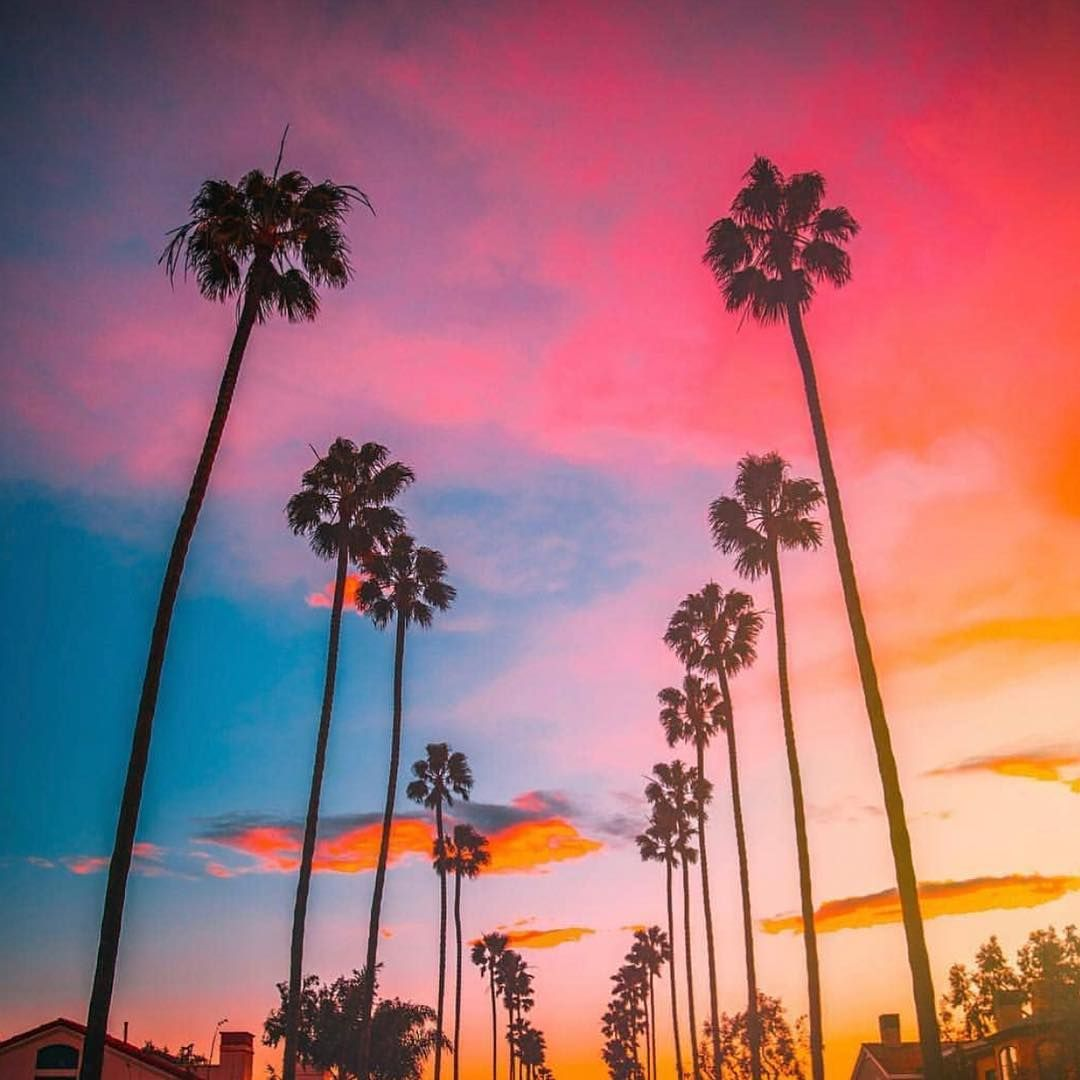 320 Likes 7 Comments The Wellground Thewellground On Instagram Magic In Lala As We Shop For More Amazingness This Sky Took O Sky Instagram This Is Us Palm trees sunset horizon sky clouds