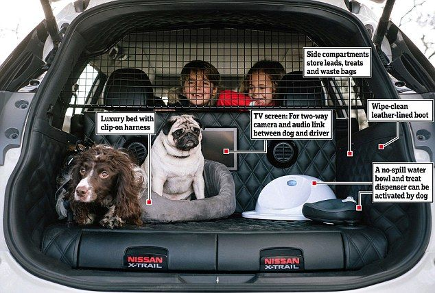 Nissan X Trail For Dogs >> Nissan Reveals Prototype Designed For Dogs Dog Car Nissan