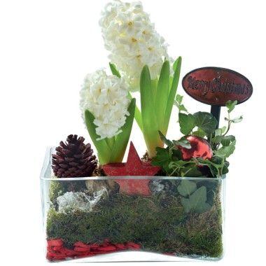 composition de no l jardini re en verre avec 2 jacinthes d co florale d 39 int rieur. Black Bedroom Furniture Sets. Home Design Ideas