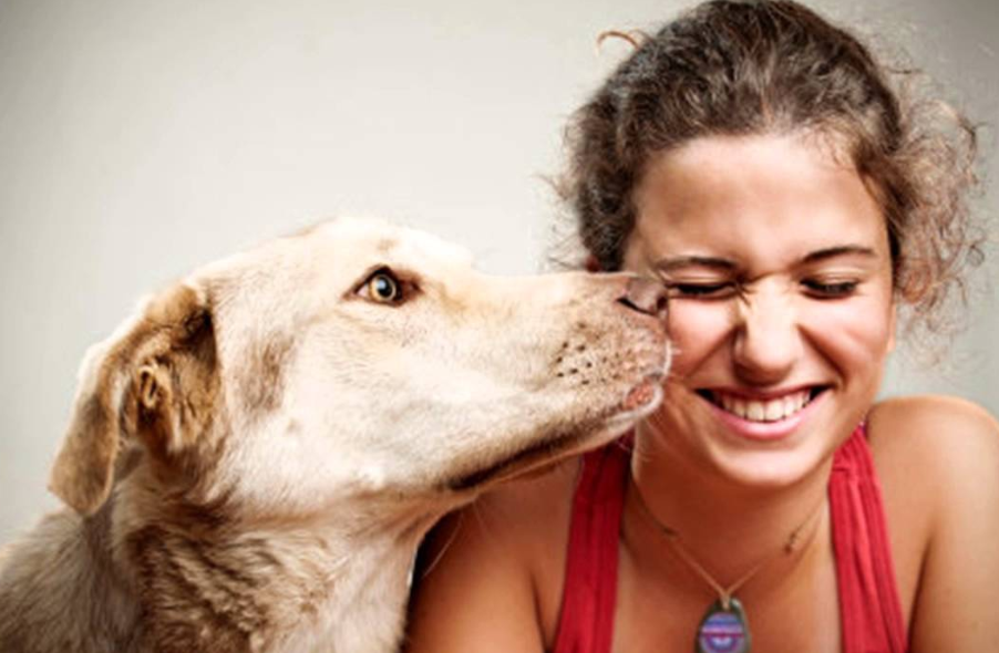 All About DogRelated Issues Pets, Dogs, Animals